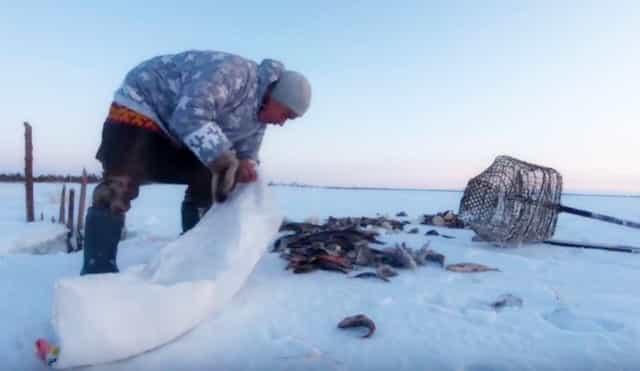 """Как """"ханты"""" рыбу добывают мешкам в мороз под минус 40 градусов"""