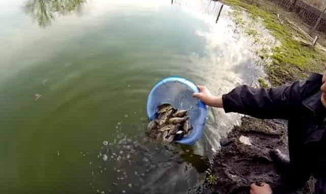 Какую рыбу лучше запустить в свой пруд на участке для рыбалки