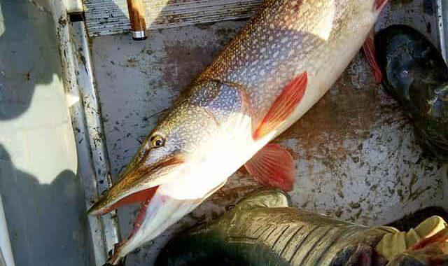 Первый заброс на рыбалке с уловом, то потом клёва не будет – примета такая