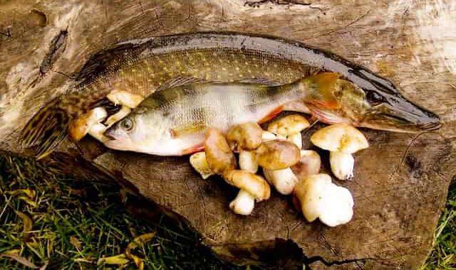 Рыбацкие лайфхаки, о которых не все знают - 10 полезных советов для успешного лова рыбы