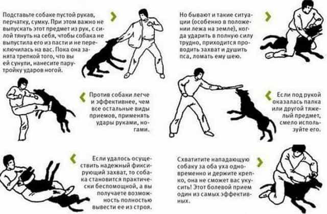 Способ отразить атаку нападавшей собаки