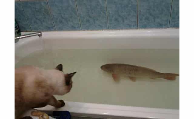 Чистая вода решит проблемы с запахом тины у рыбы
