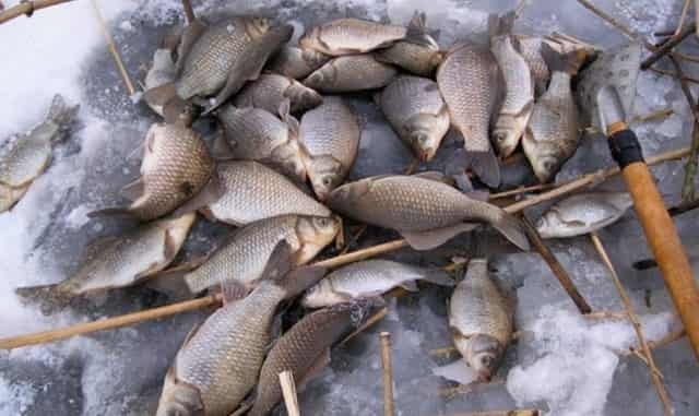 Ловля зимней рыбы на уловистую насадку