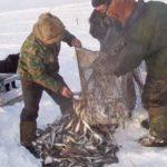 Как добывают рыбу в глухой Сибири на реке Обь