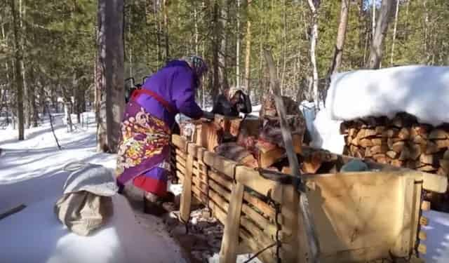 Женщины ханты собирают дрова