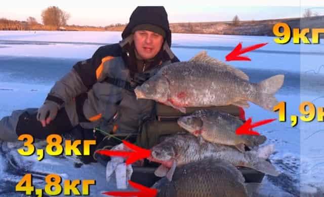 Зимняя рыбалка на огромных карпов и сазанов