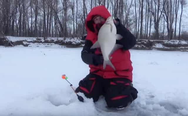 Знаменитая уловистая оснастка для ловли крупного зимнего леща и язя
