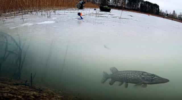 Подводные кадры рыбалки на жерлицу