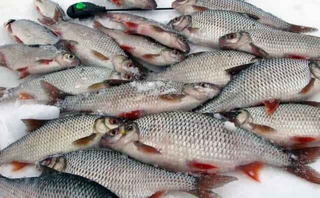 Секрет отличного улова на зимней рыбалке