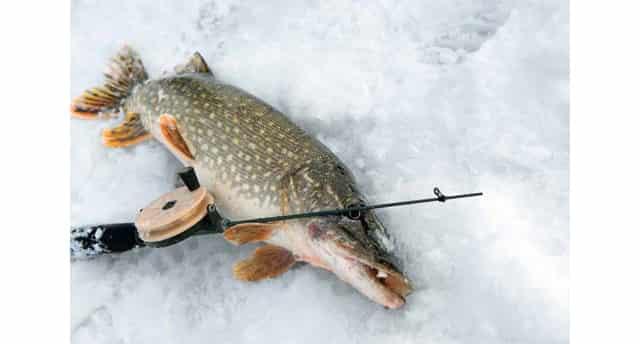 Зимняя рыбалка на щуку на мормышку с мальком