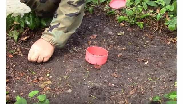 Добываем червя для рыбалки с помощью марганцовки