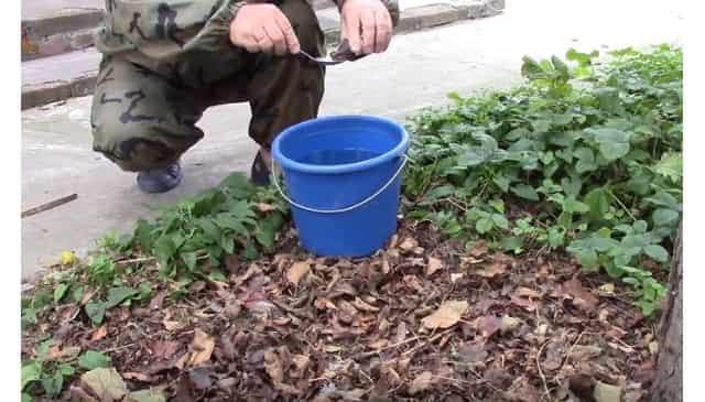 Разбавляем марганцовку с водой