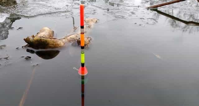 Только на поплавок или донку в нерестовый запрет и максимум с двумя крючками
